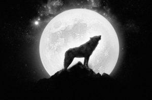 Lobo aullando luna